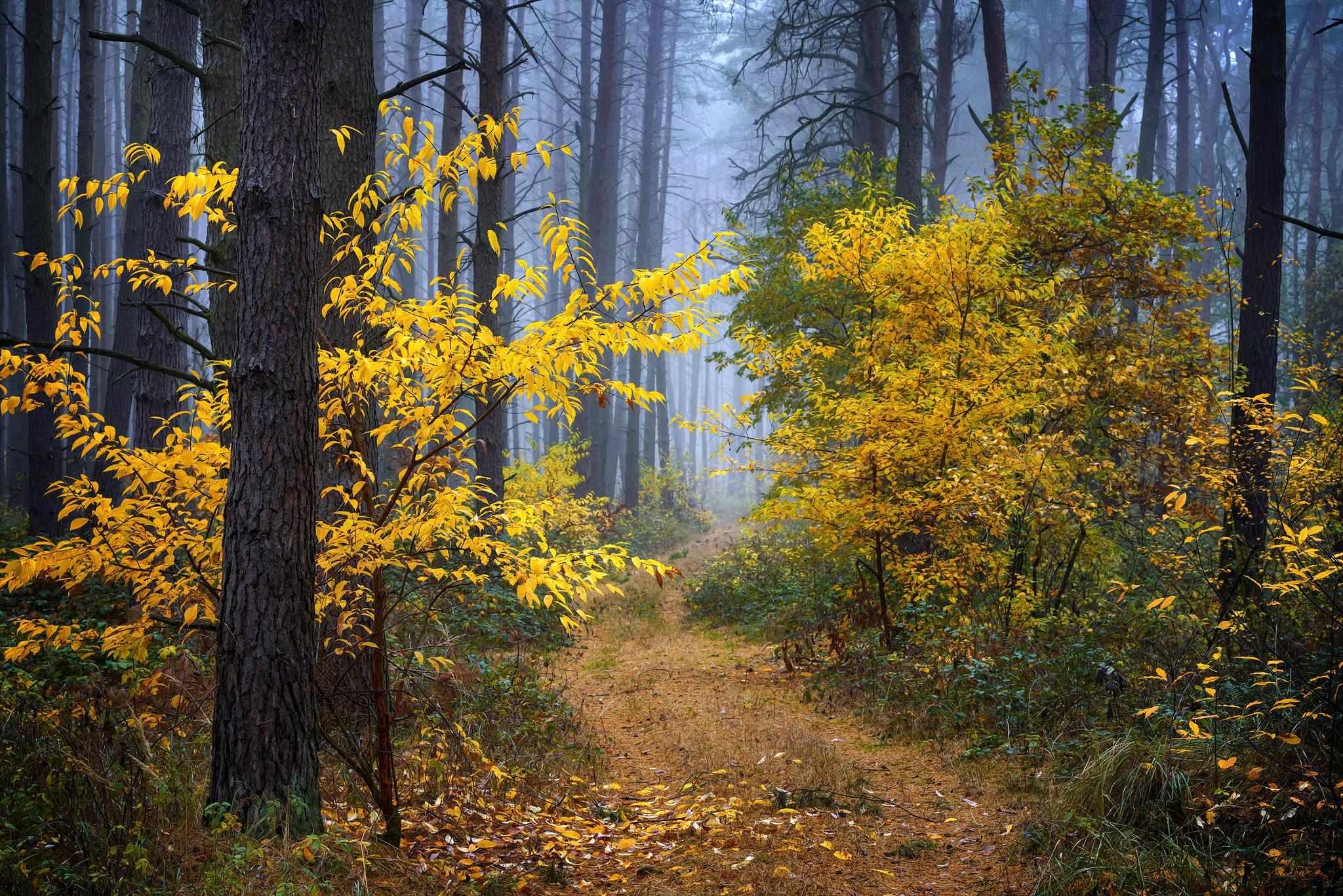 Осенняя прогулка по лесу. Radoslaw Dranikowski