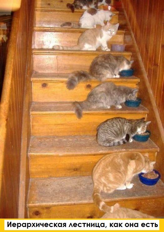 Маленькие истории котов в картинках-5