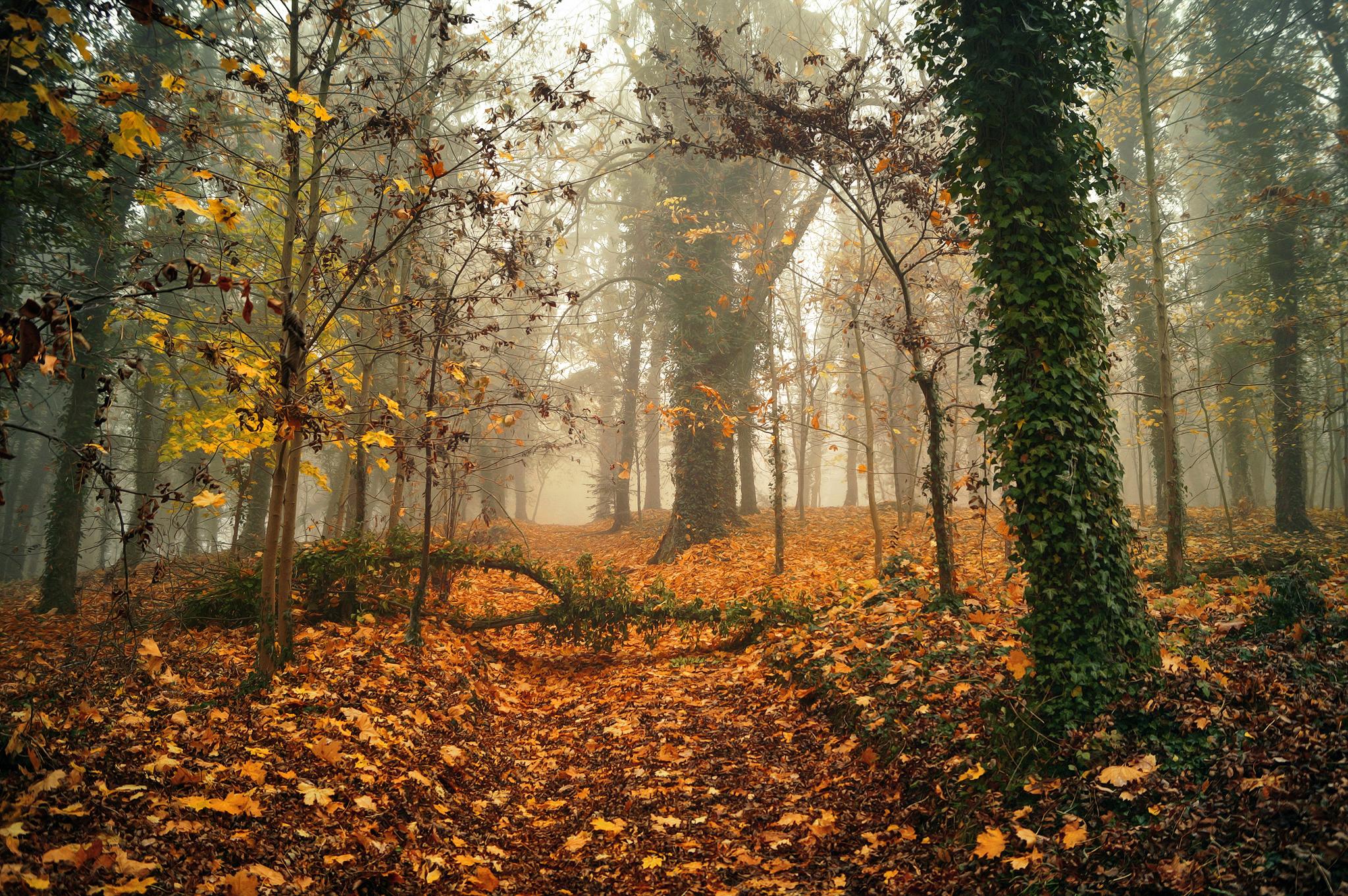 autumn in the park Radoslaw Dranikowski