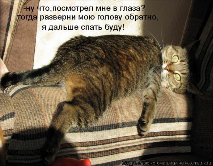 Смешные картинки кошек с натписями