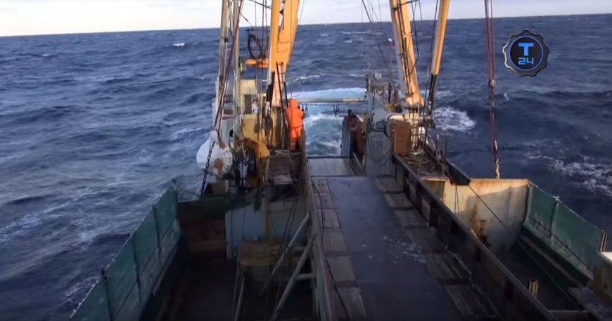 Преодоление кризиса 90-х: СМИ Японии отметили возрождение рыбной отрасли РФ