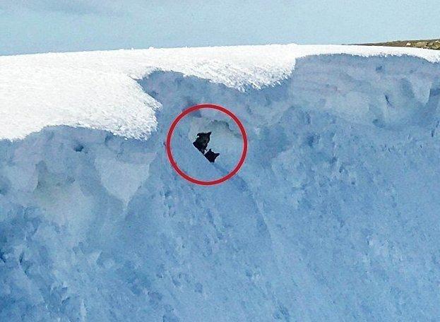 Герой-альпинист рискнул жизнью, чтобы спасти двух собак