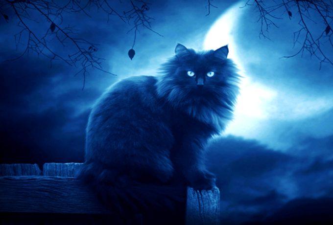 Кошки — одни из самых магических животных на земле!