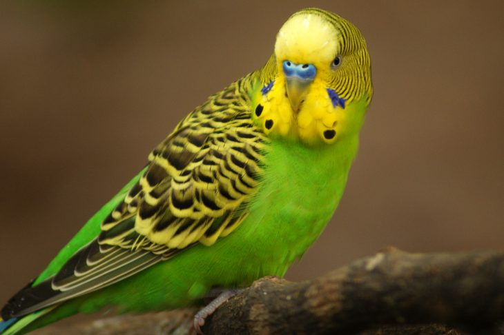 Соседке подарили слишком талантливого попугая. Мы с него попадали! позитив