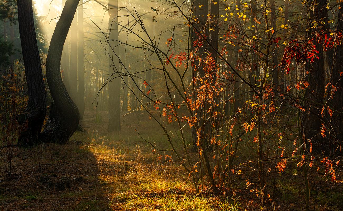 Утро. Осень