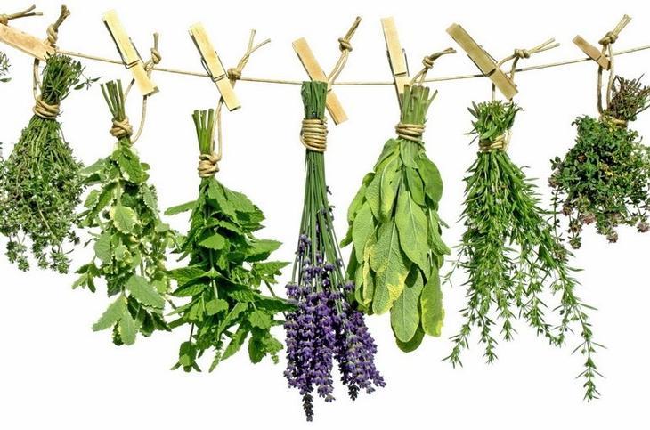 Травы снижающие аппетит - ТОП-10