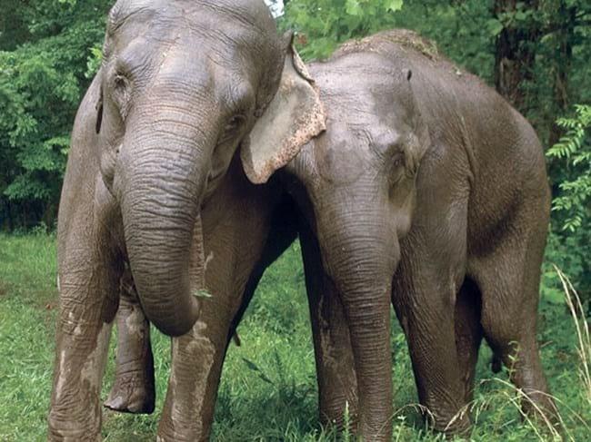 Эти трогательные фото доказывают, что ничто человеческое животным не чуждо!