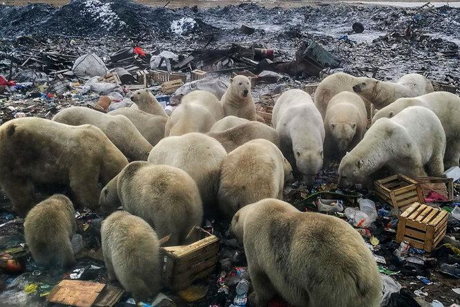 Как тает Арктика: масштабы глобального потепления в 7 снимках