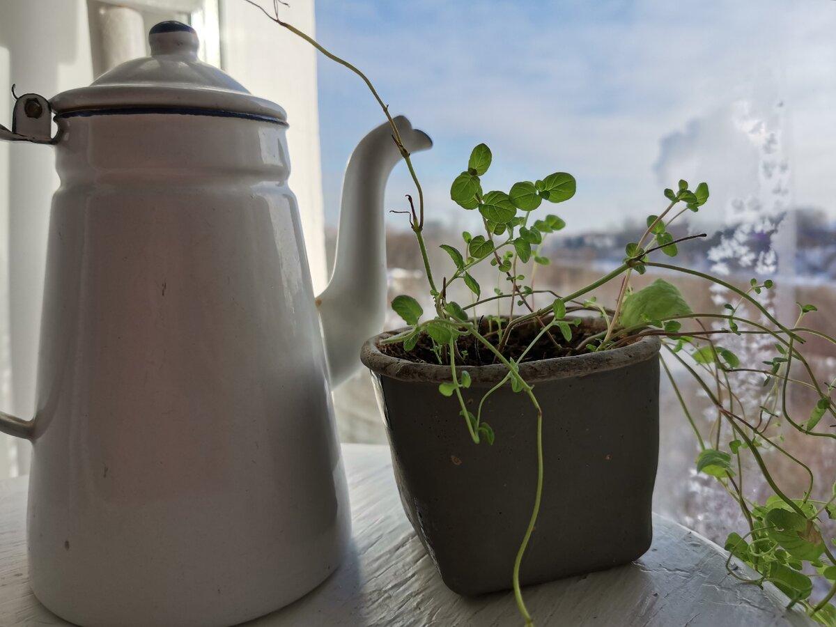 Всю весну едим свою свежую зелень (вырастает за неделю на подоконнике без особых хлопот)