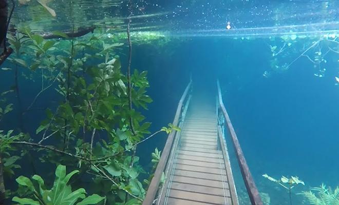 Сильный дождь поднял уровень воды в озере и превратил окрестный лес в подводный мир: видео