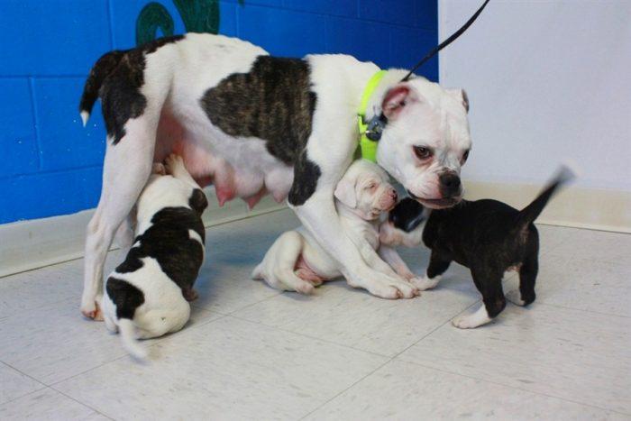 Решив избавиться от крошечных щенков, он запер их в чемодане и выбросил. Но мама-собака сумела их спасти