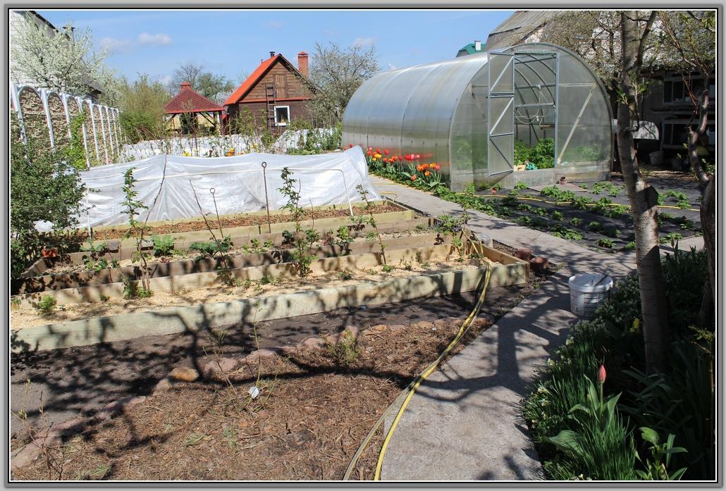 Мой апрельский огород