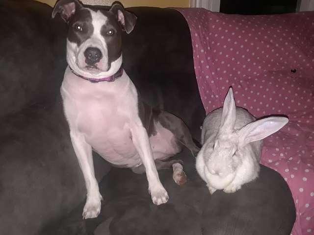 собака и кролик на диване