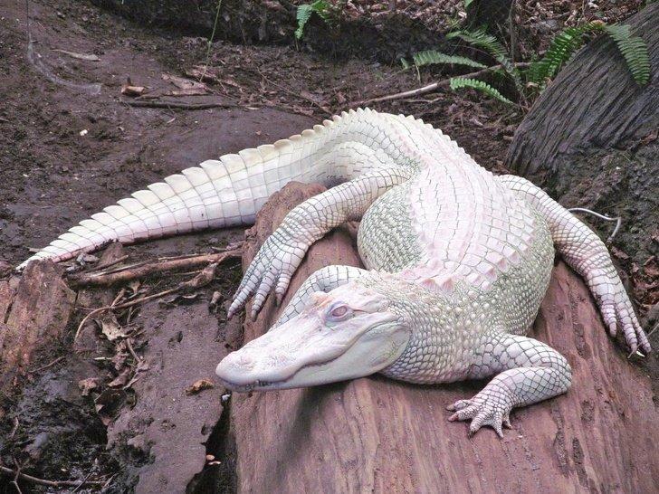 Удивительно выглядящие животные-альбиносы альбиносы