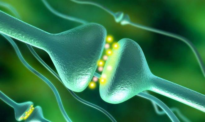 Искусственный синапс позволит создавать похожие на мозг компьютеры