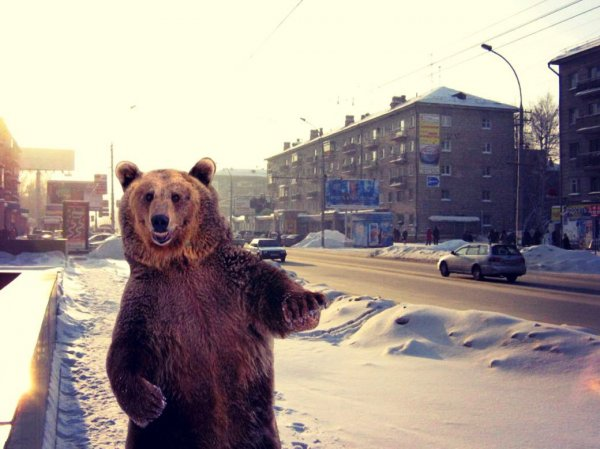 Медвежья охота на граждан США