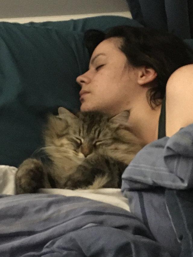 Когда неласковый кот сам свернулся клубочком на коленях хозяйки, она поняла - грядет что-то важное