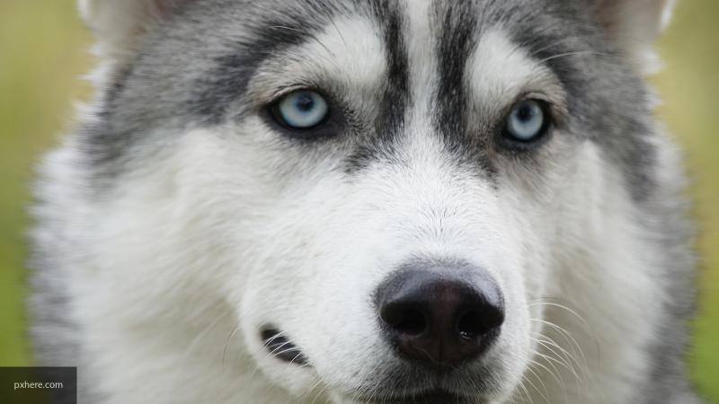 Ученые объяснили природу грусти в глазах у собак