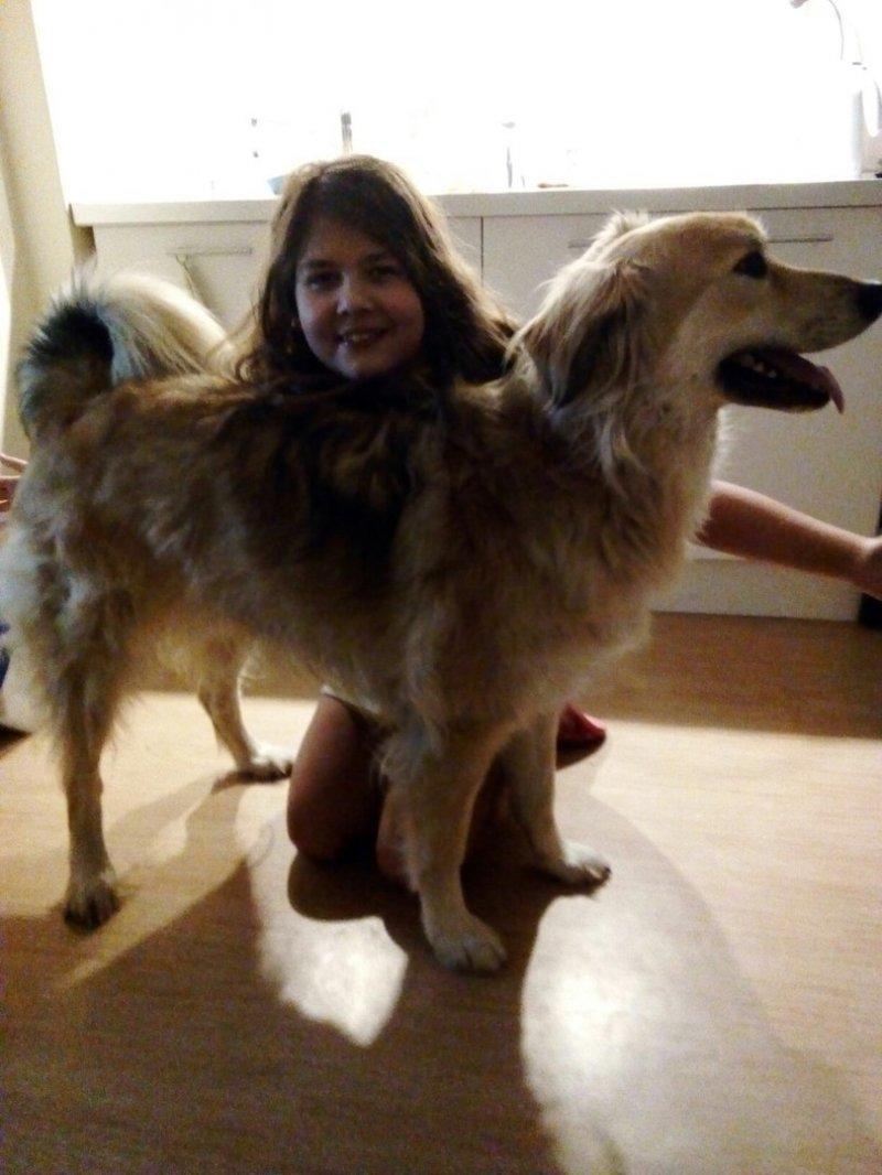 Жители деревни хотели избавиться от этого щеночка лабрадор, ретривер, собака, щенок