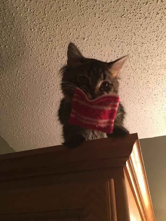 Котёнок получил от своего ве…