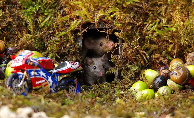 Фотограф обнаружил семью мышей в своем саду и построил для них мини-деревню