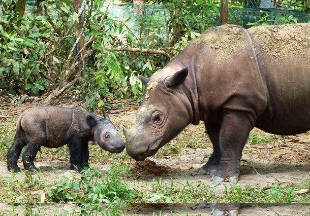 Исчезающие виды животных, которых почти невозможно встретить в дикой природе