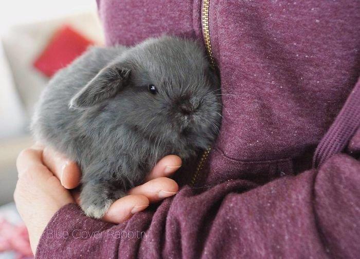 19. Кролики это не только ценный мех, детеныш, детеныши, детеныши животных, кролик, кролики, пушистый позитив, ушастый