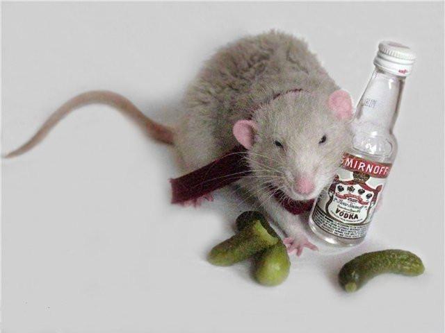 Червям и крысам помогает. В США испытали первое в мире лекарство от алкоголизма