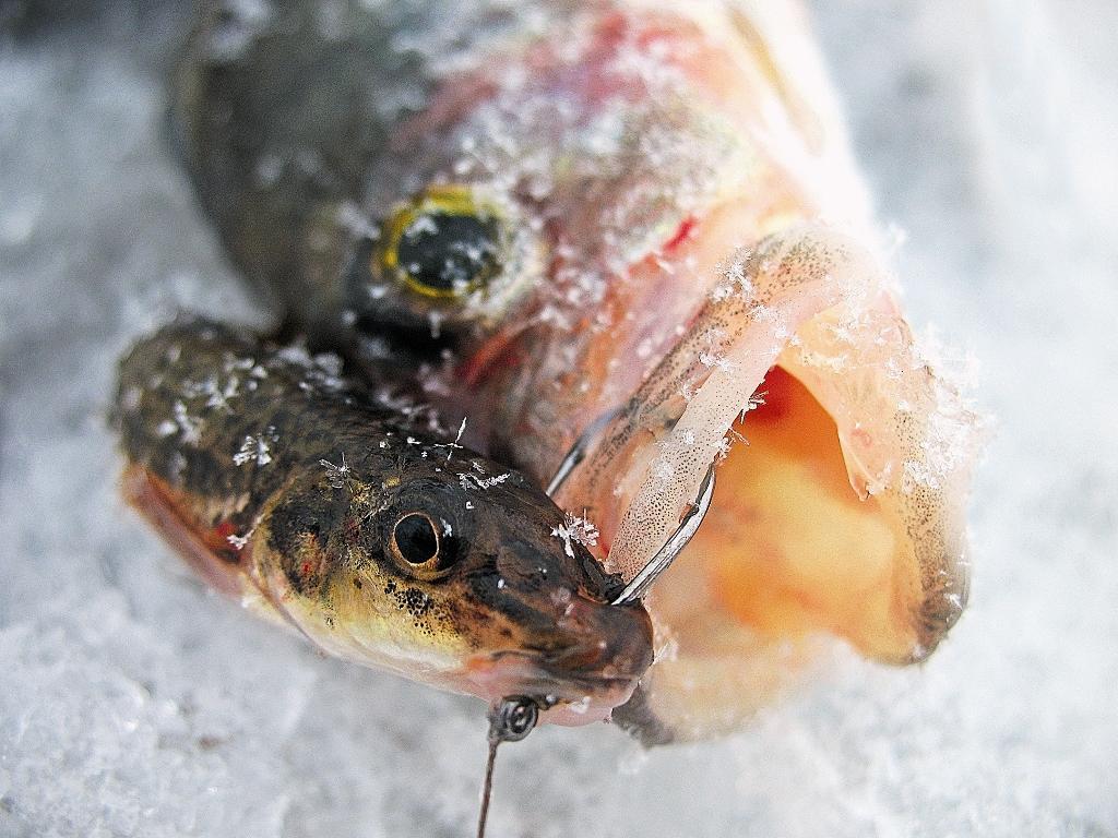 Одинарный крючок хорошо подходит для насаживания маленькой рыбки-приманки.