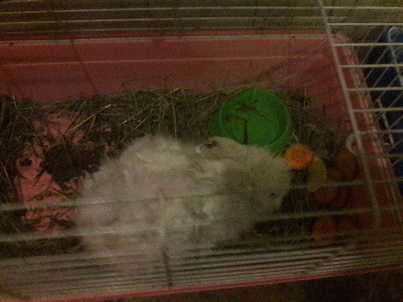 Кролик постарел, и хозяева отдали его в зоопарк! Но там с бедным грызуном случилась история