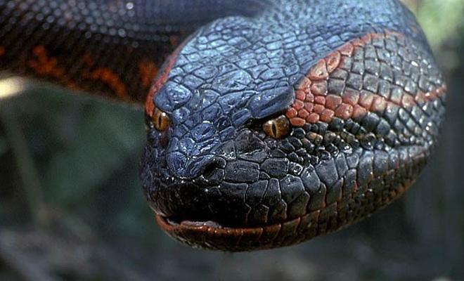 7 самых больших змей случайно попавших на камеру