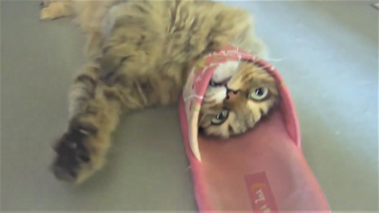 Коты и Тапки - Друзья или Вр…