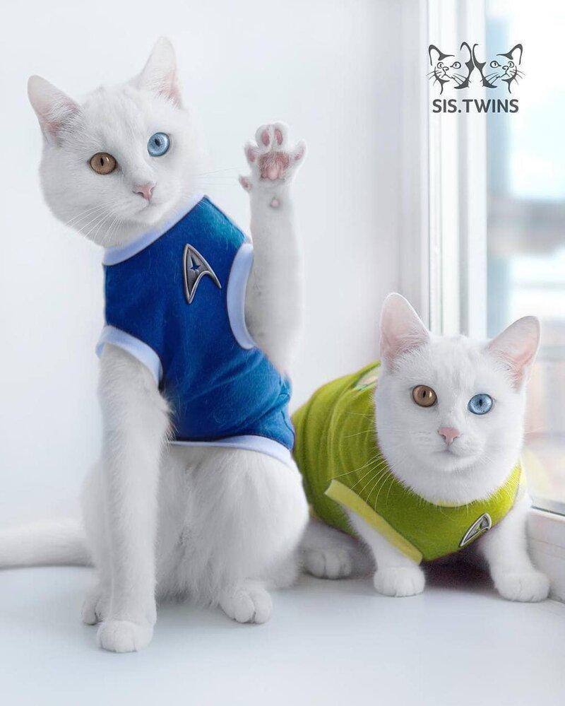 Знакомьтесь с невероятно красивыми кошками-близнецами Ирисс и Абисс Абисс, Айрис, глаза, кошка, красота, окрас