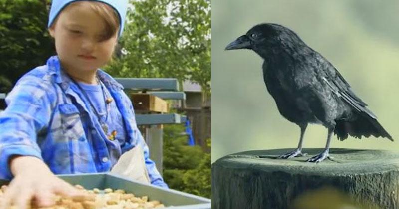 Девочка ежедневно кормила ворон. Птицы ей отплатили весьма необычным образом!
