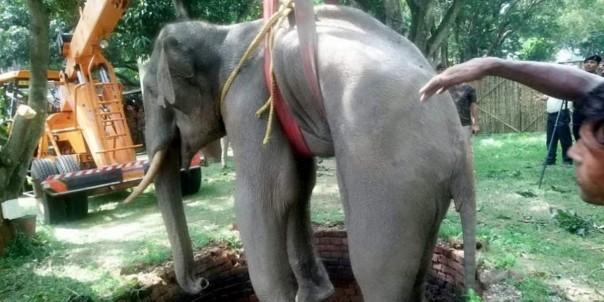 Как индийские военные спасали слона из колодца. животные,природа,происшествия,слоны,спасение