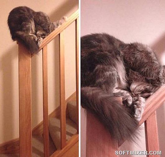 Кошачья логика веселые картинки,животные,позитив,приколы,Смешные животные