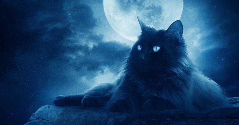 Кто такой кот Баюн?