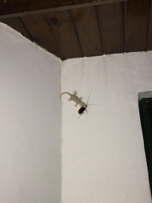 А здесь ящерица наносит ответный удар миру насекомых мрачно, мрачные шутки, необычно, необычные картинки, необычные фотографии, природа, пугающе, фото