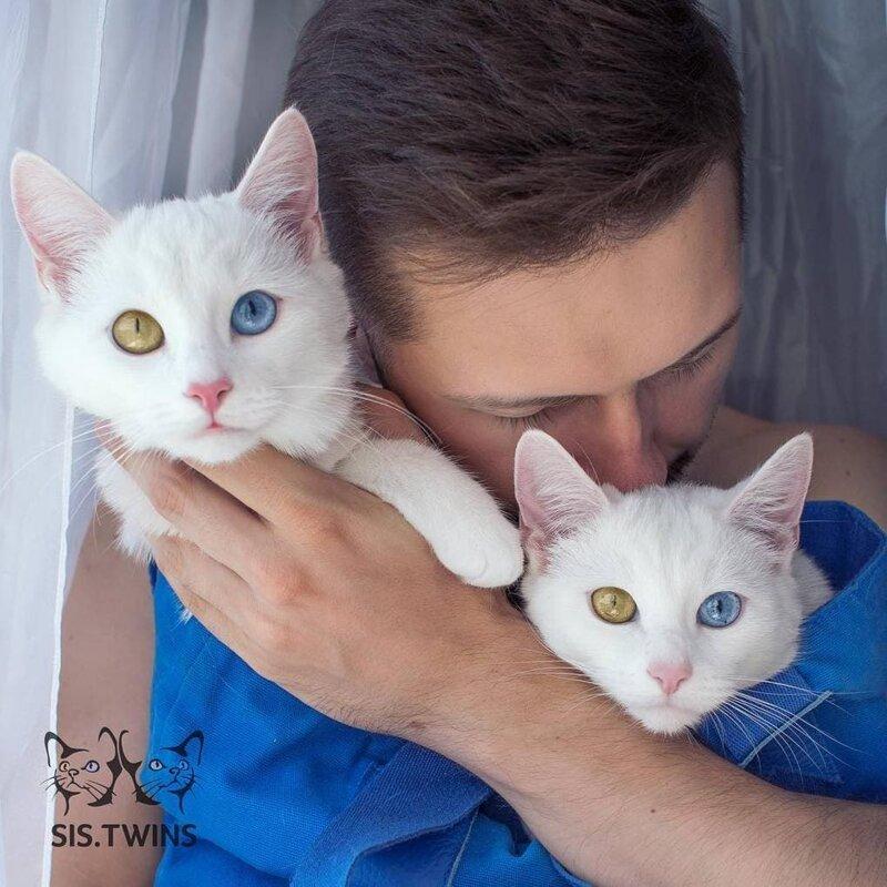 Котят отдавали в добрые руки по объявлению в социальных сетях, так Павел Дягилев нашёл своих питомцев Абисс, Айрис, глаза, кошка, красота, окрас