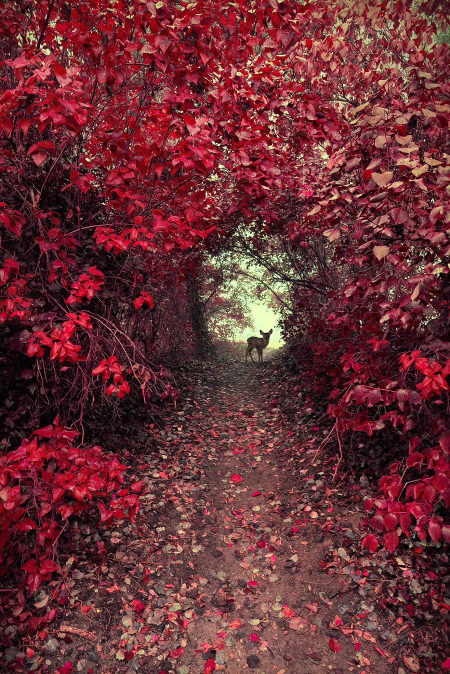 Magical Garden Radoslaw Dranikowski