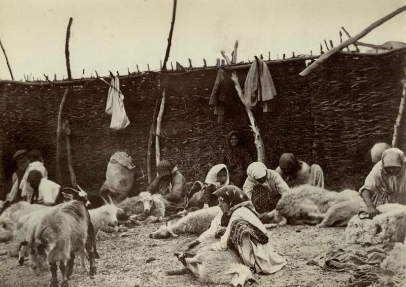 13. Стрижка овец до революции, донские казаки, история, казаки, казачий быт, фотографии