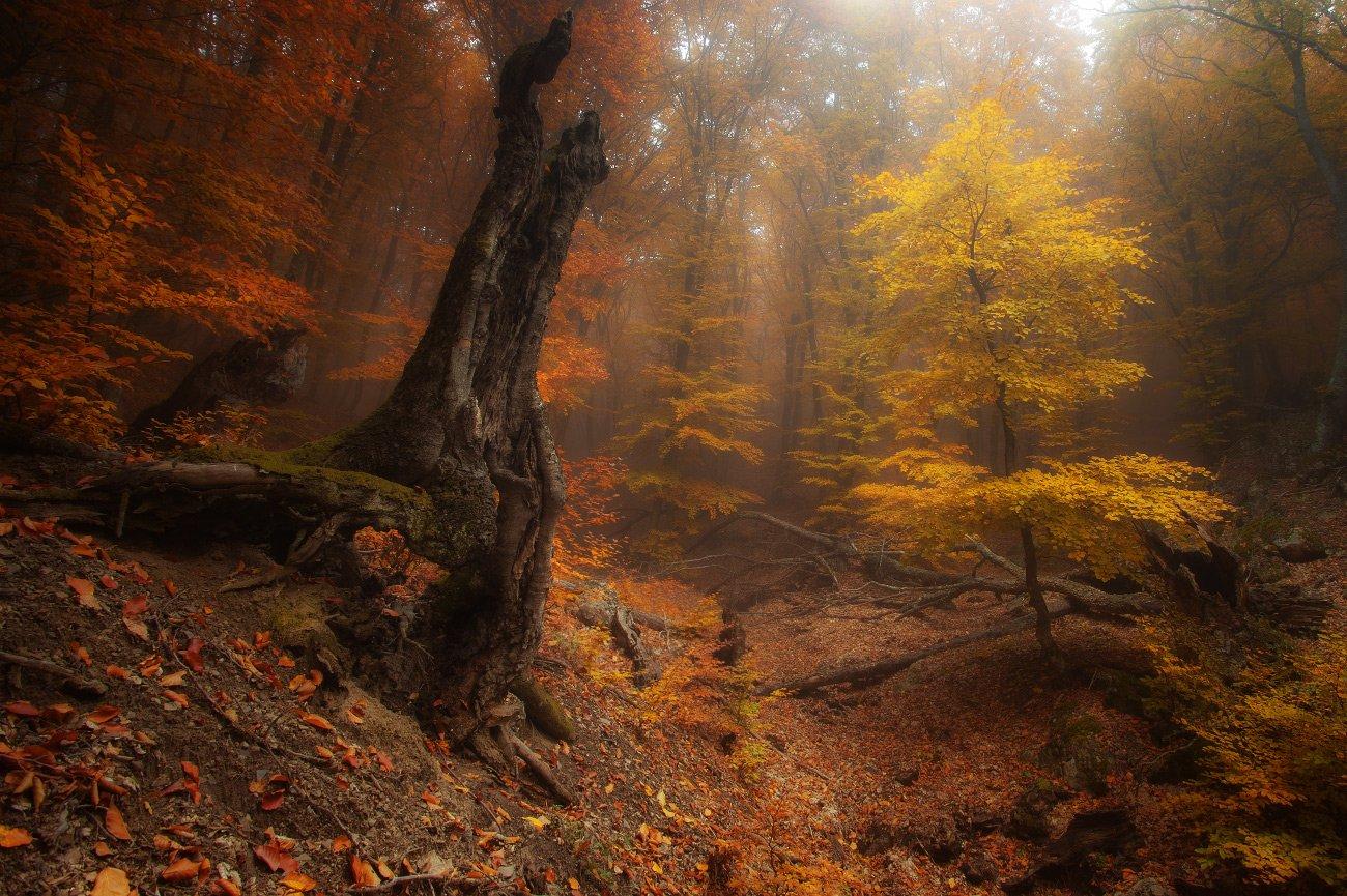 Таинственный лес.  Андрей Уляшев (Mercand)