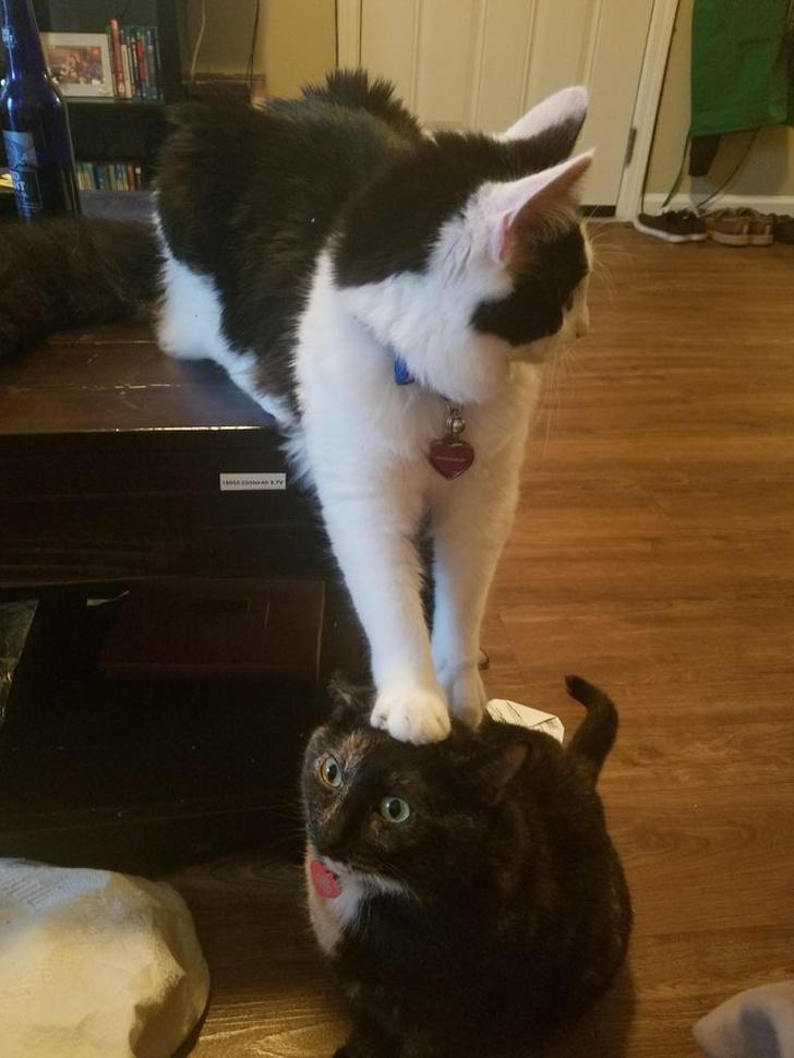 Когда у котов слетают настройки и начинается шоу