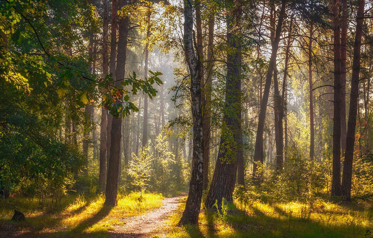 качественные фотографии российского леса формирование вкуса