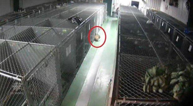 Камера слежения зафиксировала странную картину. Увидев ее, работники приюта сильно удивились...