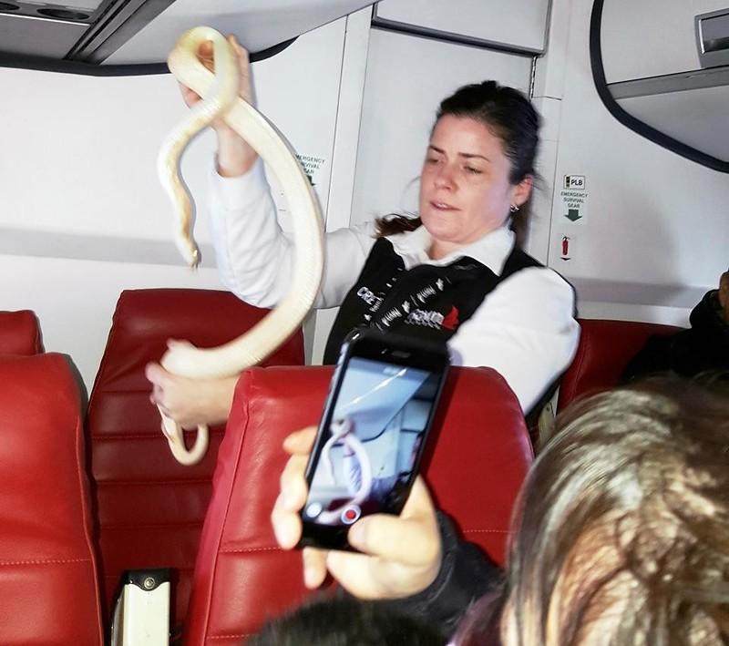 В США потерявшуюся на борту самолета змею помогли найти пассажиры