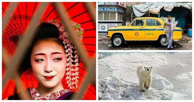От Африки до арктической тундры России: финалисты фотоконкурса National Geographic Traveller 2019