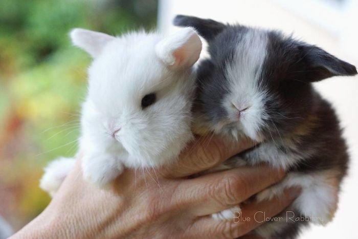 15. Кролики это не только ценный мех, детеныш, детеныши, детеныши животных, кролик, кролики, пушистый позитив, ушастый