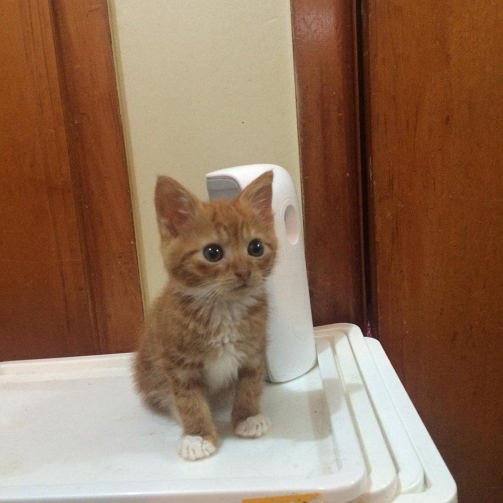 Этот котёнок отстаёт в росте от всех сородичей, но зато имеет большое любящее сердце