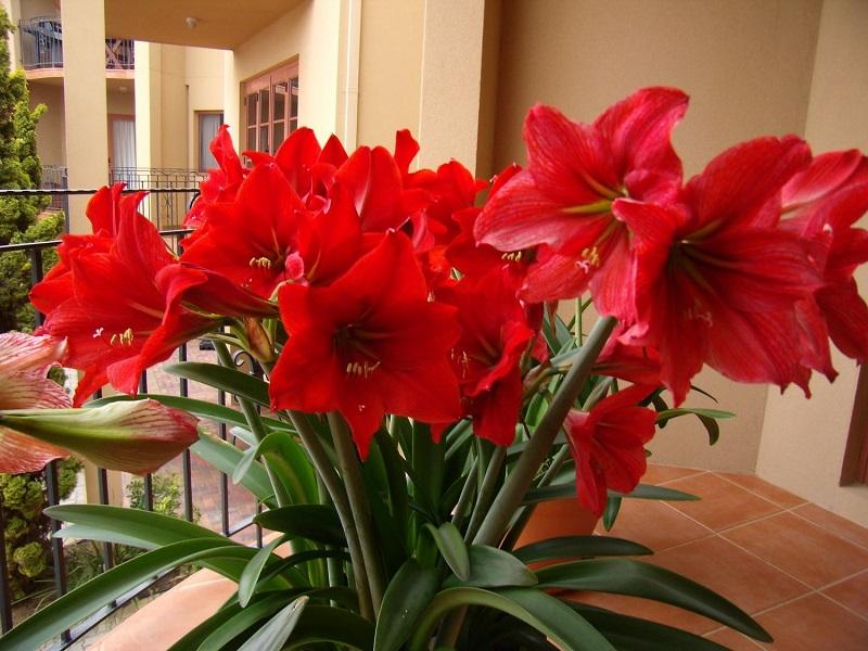 Домашние цветущие цветы картинки